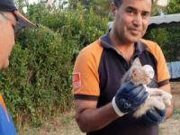Kuyuda mahsur kalan kedi kurtarıldı