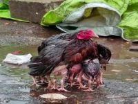 O da bir anne!