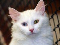 Van Kedi Villası'nda beş yıldızlı konfor