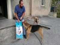 Hakkari'de '4 Ekim Hayvanları Korumu Günü' etkinlikleri