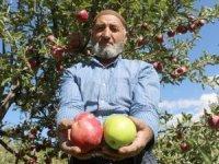 Aynı ağaçta hem yeşil hem kırmızı elma yetiştirdi