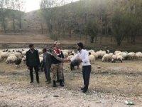 Çobanı bağlayıp 135 hayvanı çaldılar