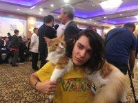 Kediler güzellik için yarıştı