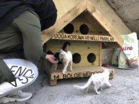 Hakkari'de ilk defa kedi-köpek evleri yapıldı