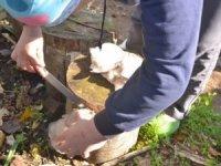 Kütükte yetiştirdiği mantarları 15 liradan satıyor