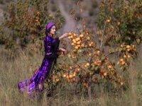 Çukurca'da cennet hurması hasadı