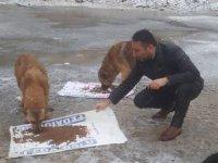 Hakkari'de sokak hayvanlarına yem bırakıldı