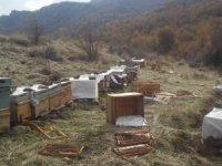 Çukurca'da ayılar arı kovanlara saldırdı