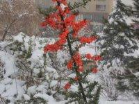 Hakkari'de kartpostallık kar manzarası