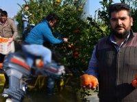 Çukurova'da kayıkla mandalina hasadı başladı