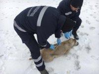 Hakkari'de hayvanlara kuduz aşısı yapıldı