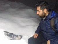 Sokak kedisi donarak öldü