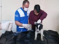 Aracın çarptığı yavru köpek tedavi altına alındı