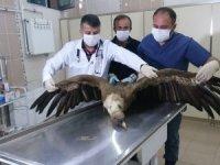 Zehirlenen akbaba tedavi altına alındı