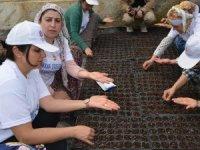 Kadınlardan türkülü tohum ekimi