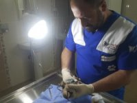 Yaralı halde buluna keklik tedavi altına alındı