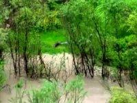 Zap nehrinde ilk kez su samuru görüldü