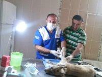202 sokak hayvanına kuduz aşısı yapıldı