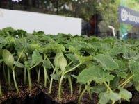 Yüksek fiyatlar vatandaşı sebze üretimine yöneltiyor