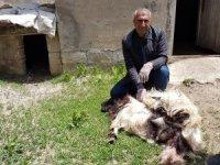 Başıboş köpekler 18 keçiyi telef etti