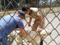 Hakkari'de sahipli hayvanlara kuduz aşısı yapıldı