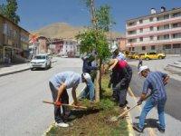 Belediye kuruyan ağaçların yerine yenilerini dikti