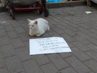 Dilenci kedi şaşırttı...