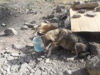 Hakkari'de başıboş köpeklere yiyecek bırakıldı