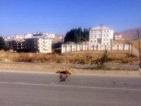 Yüksekova'da aracın çarptığı köpek telef oldu