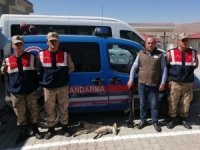 Kaçak Tilki avlayan şahsa 2 bin 20 lira ceza