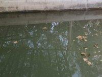 İki çocuğun girdiği havuz sonları oldu