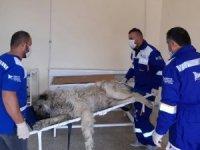 Hakkari'de sokak hayvanlarının bakım ve tedavileri yapıldı