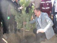 Hakkari'de halk, asker ve polis 50 bin fidan dikti