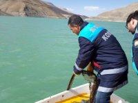 Zernek Barajındaki balıkların stok tespit çalışması yapıldı