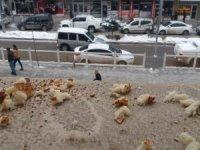 Belediye çalışanları kuşlar için yiyecek bıraktı