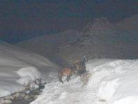 Hakkari dağlık alanda mahsur kalan atlar kurtarıldı