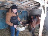 Donmaktan kurtarılan at sağlığına kavuşuyor