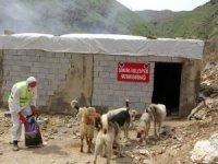 Şemdinli'de sokak hayvanları unutulmadı