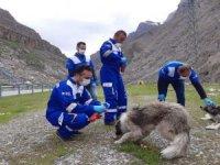 Hakkari'de Sokak hayvanları unutulmadı