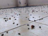 Bir evi böcekler istila etti