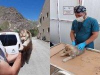 Köpek yavruları sağlık taramasından geçti