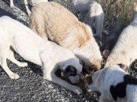 Sınırda sokak hayvanlara mama verildi