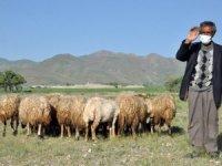 Mehmet Emin amcamıza 20 koyun hediye ettik
