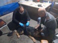 Zehirlenen köpek tedavi altına alındı