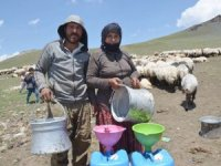 Hakkari'nin Nebırnav Yaylası'na göçerler akın etti