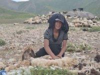 22 yaşındaki Zeynep çobanlık yapıyor