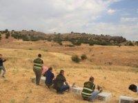 750 kınalı keklik doğaya bırakıldı