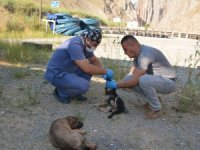 Sokak hayvanları sağlık taramasından geçirildi