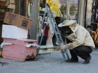 Hakkari'de arı kolonisi çarşı merkezine indi