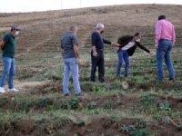 Şemdinli'de 350 bin meşe ağacı dikilecek!
